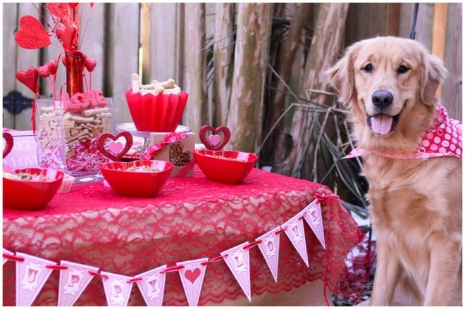 puppy love party valentine's