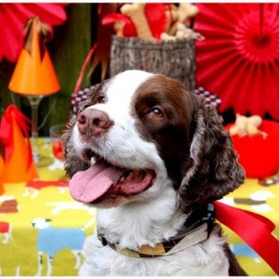 pawsh puppy birthday party