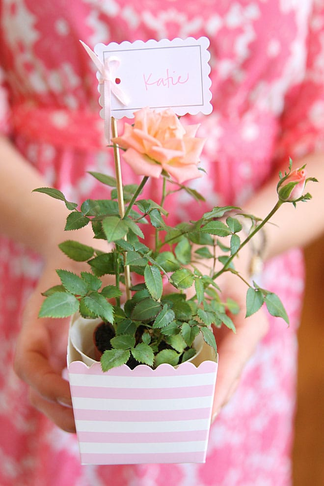 Favor Idea: Mini roses in little baking containers