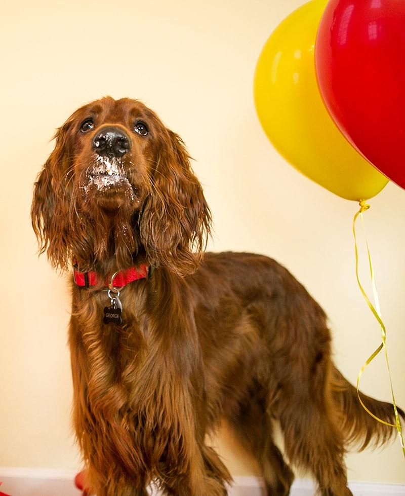Dog Birthday Pawty