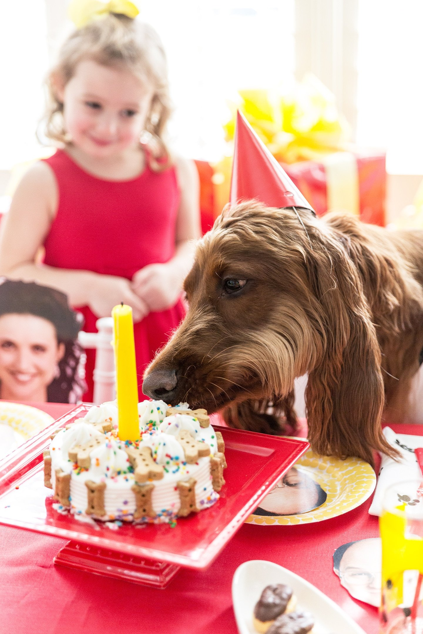 a dog eating a birthday cake with a little girl watching