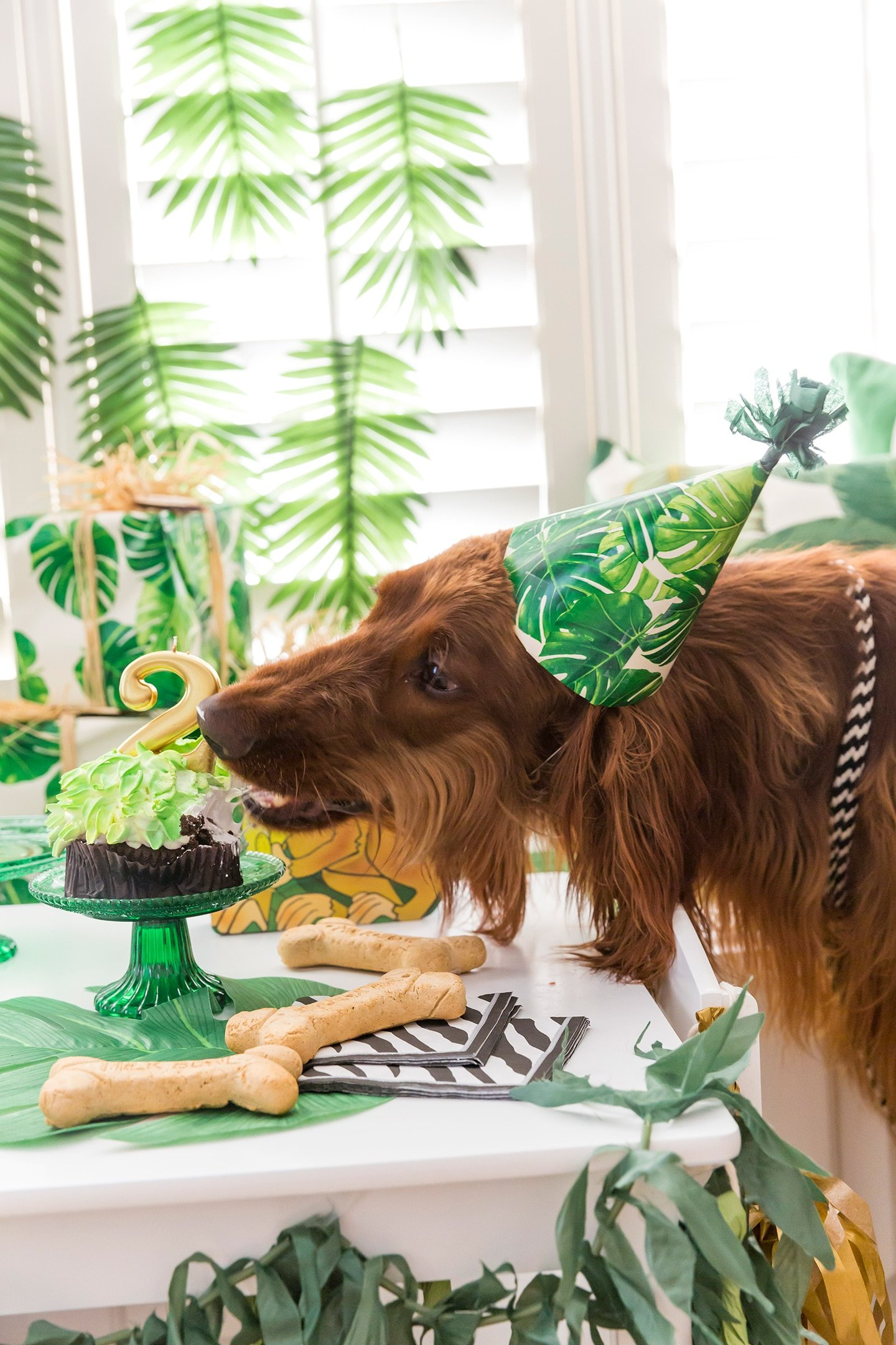 George of the Jungle Dog Birthday Party