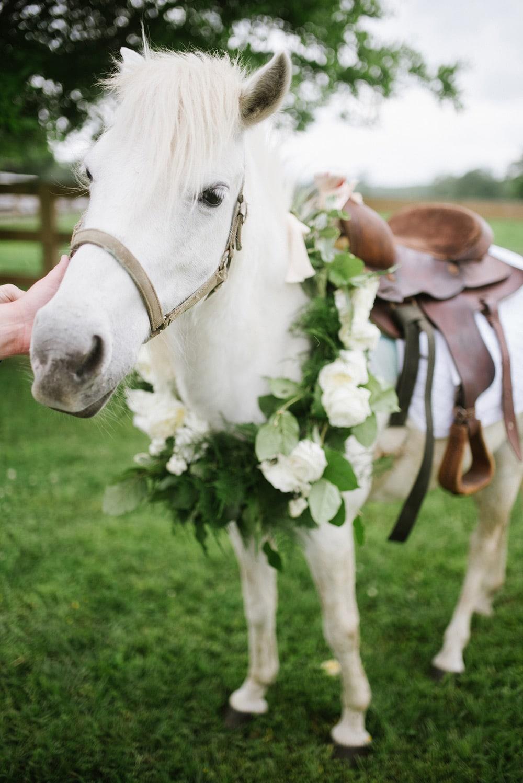 Kentucky Derby Horse Party